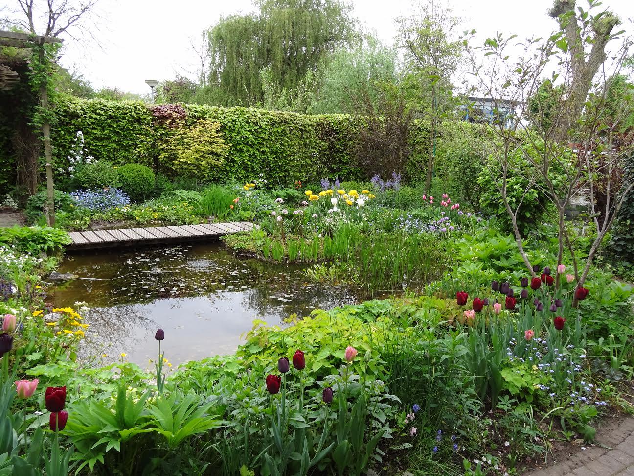 Groei bloei excursie naar de tuin van tineke in for Tuin aanleggen nijmegen